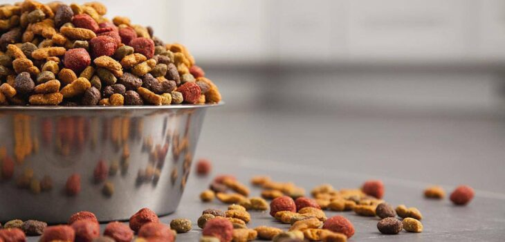 How Do You Choose a High-Quality Dog Food Brand