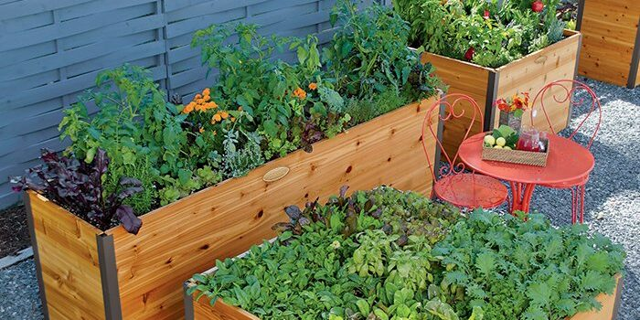 A Guide to Raised Garden Beds